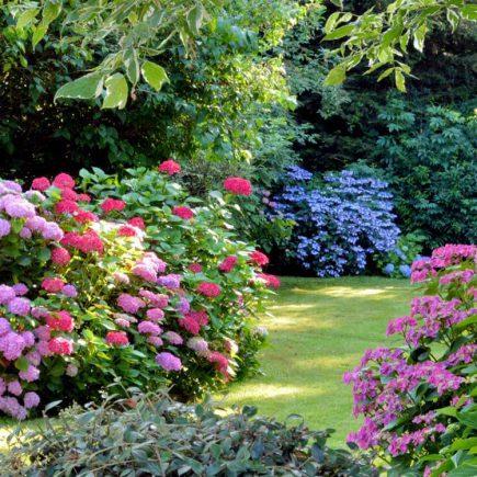 Une nature apprivoisée dans votre jardin